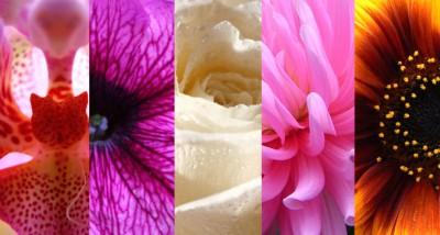 kvetiny_400_2.jpg